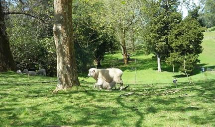 ニュージーランドの羊商品-3