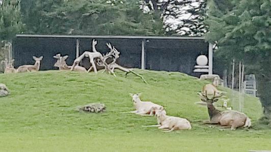 Feildingの鹿パーク