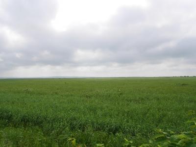 160802サロベツ湿原原野01