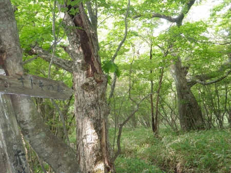 160612長七郎山~オトギの森 (9)s