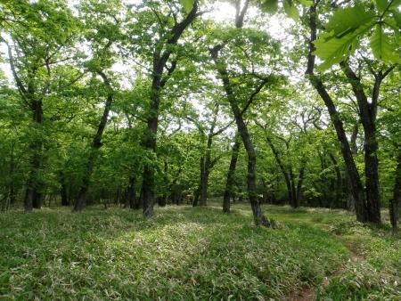 160612長七郎山~オトギの森 (16)s