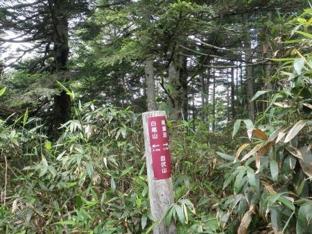 160729鳩待峠~富士見峠~一ノ瀬 (15)s
