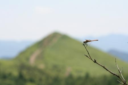 160809飯盛山 (28)s