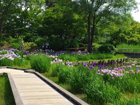 アイリスの池