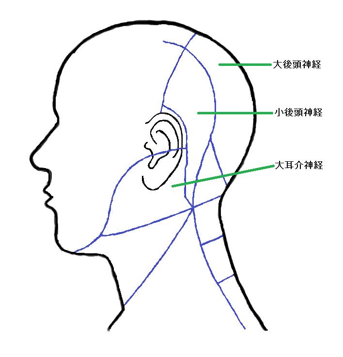 神経皮枝支配領域
