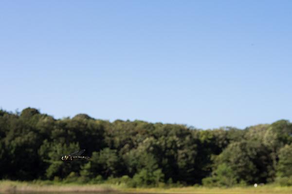 飛翔ヤンマ