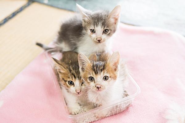 チビ猫三兄弟