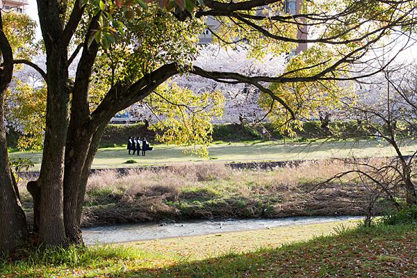 瀬戸川沿い