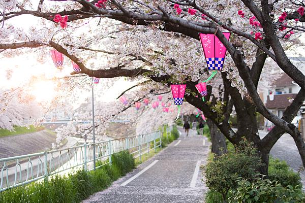 香流川桜と西日