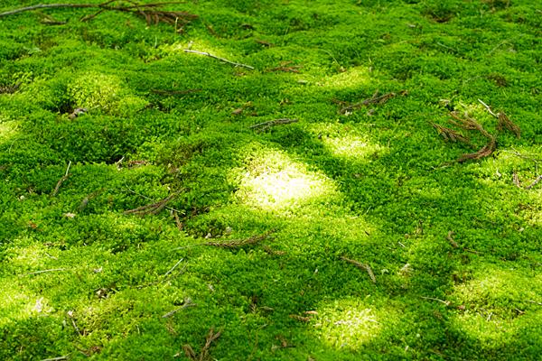 緑に染まる苔と木漏れ日