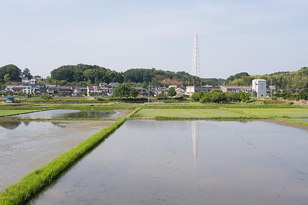 田んぼ風景と瀬戸デジタルタワー