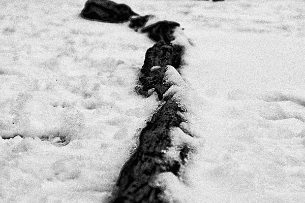雪に埋もれた朽ち木