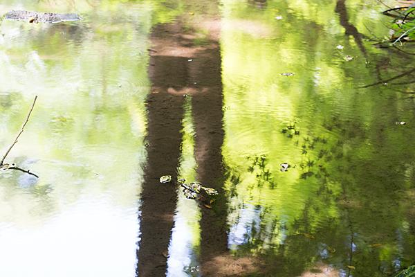水面に映り込む緑