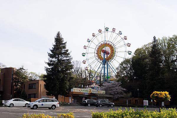 東山動物園の観覧車と桜