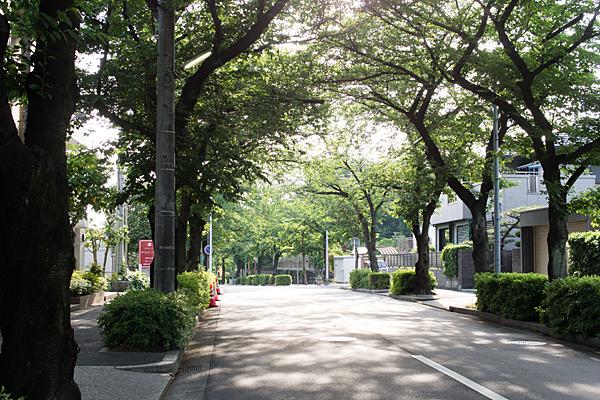 桜並木の新緑