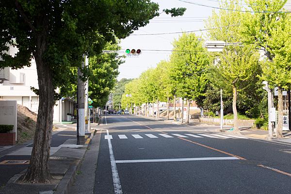 街路樹も新緑