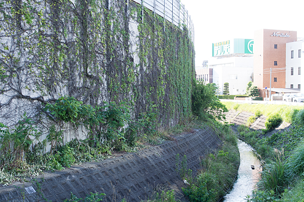 川の流れと壁のもじゃ