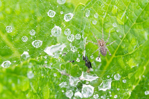 蜘蛛と蜘蛛の糸と滴