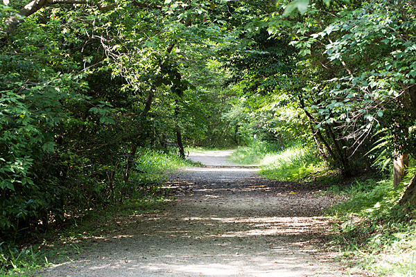 森林公園緑の散策路