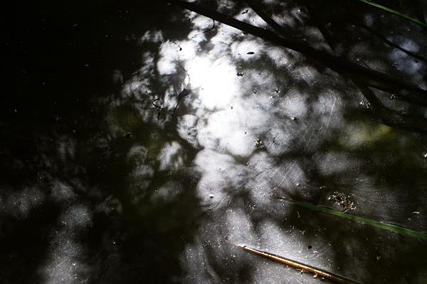 光影の水面