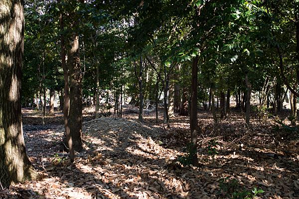 境内の雑木林