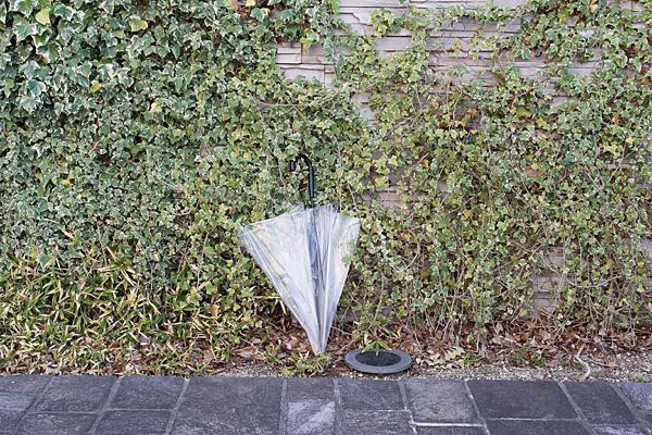 ビニール傘とツタの壁