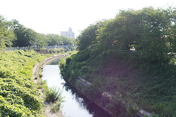香流川とウスバキトンボの群れ