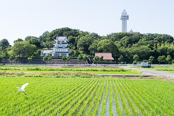 城山の田んぼ夏風景