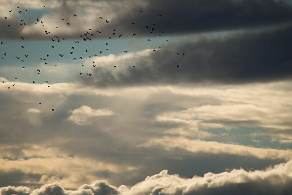 夕空をいく鳥たち