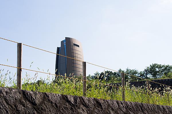 アクアタワーとエノコログサ