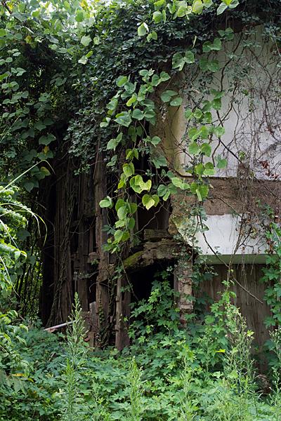 植物に覆われた空き家