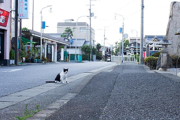 長浜の野良猫