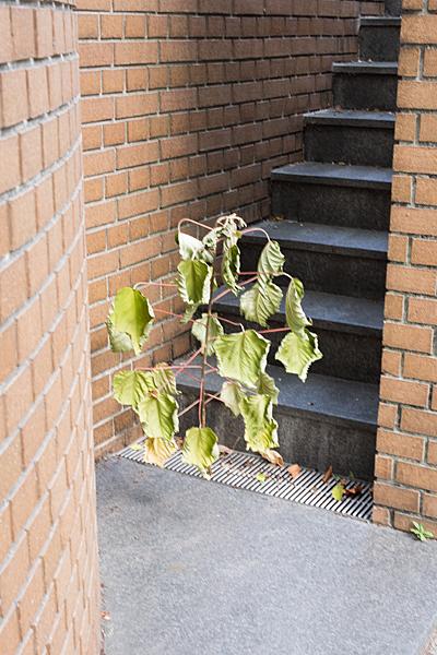 階段前の木
