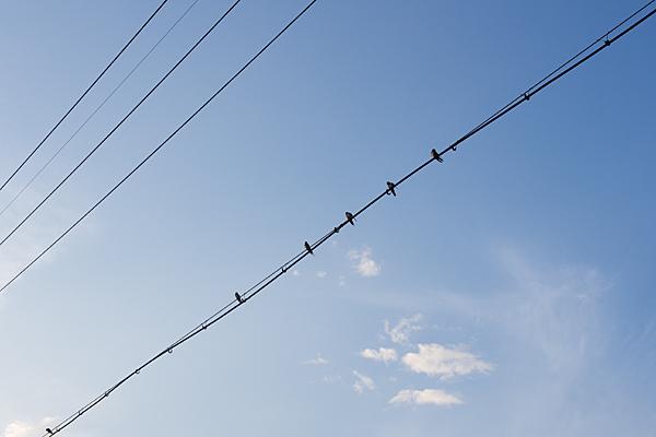 電線にとまる夏のツバメ