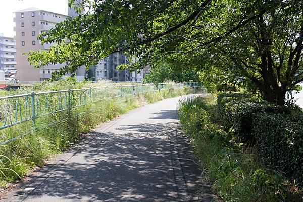 夏の遊歩道と桜の木