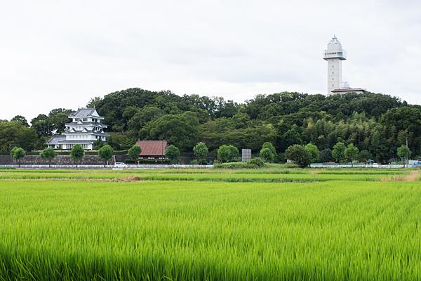 城山の田んぼ風景