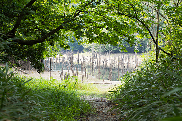 海上池の夏風景