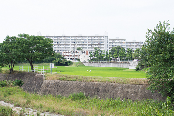 香流川沿い田んぼ風景