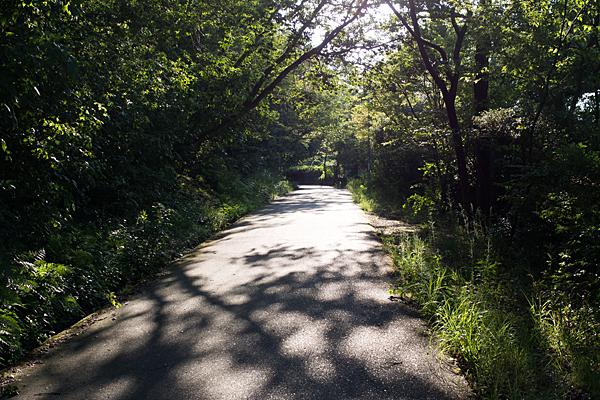散策路の木漏れ日
