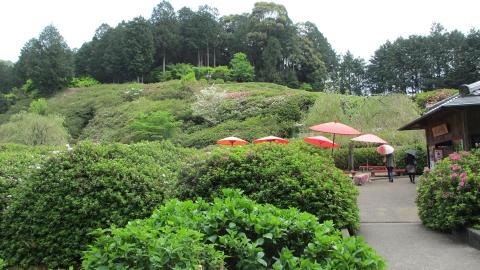 境内にあるお茶やさん(花の茶屋)