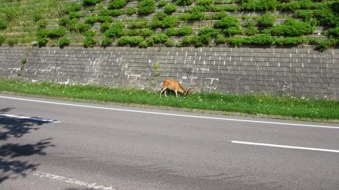 鹿が草を食んでいました。