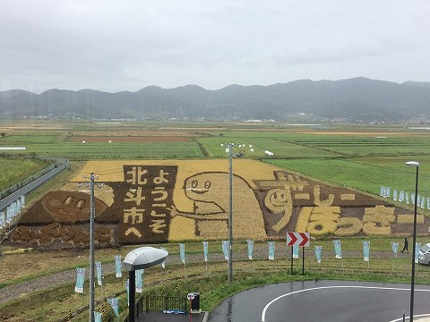 「田んぼアート」の稲が、全て刈られていました。≪10月22日撮影≫