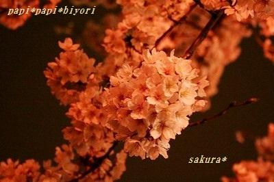 夜桜20162
