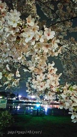 見納め桜★2016