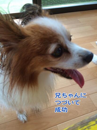 fc2blog_20160729183726b8c.jpg