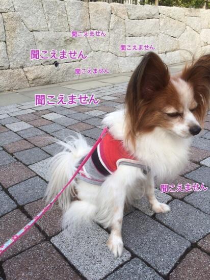 fc2blog_20161014204308e8d.jpg