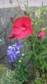 20160626赤い花