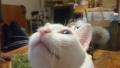 20160918ネコのリンちゃん
