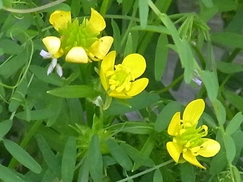 R0019078黄色い花何?_500