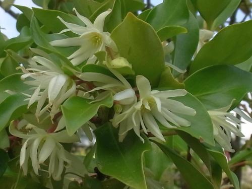 R0019070白い花何C_500